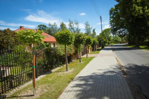 Chodnik i szpaler kulistych klonów wzdłuż ul. Głównej - jedna z ostatnich inwestycji we wsi.